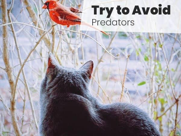 Try to Avoid Predators