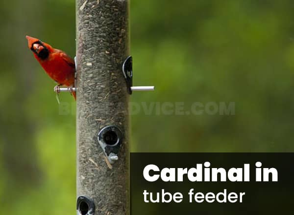 Tube feeder for cardinals
