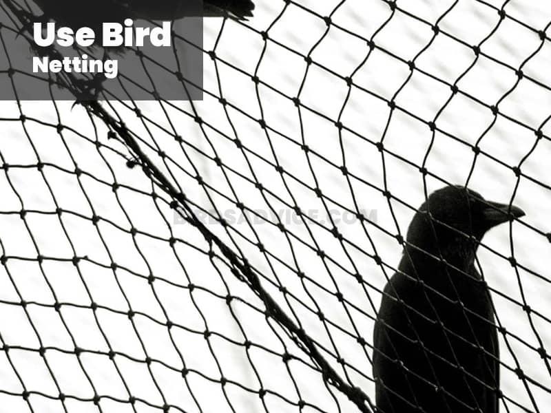 Use bird netting