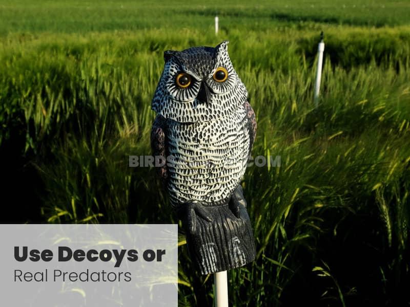 Use decoys or real predators