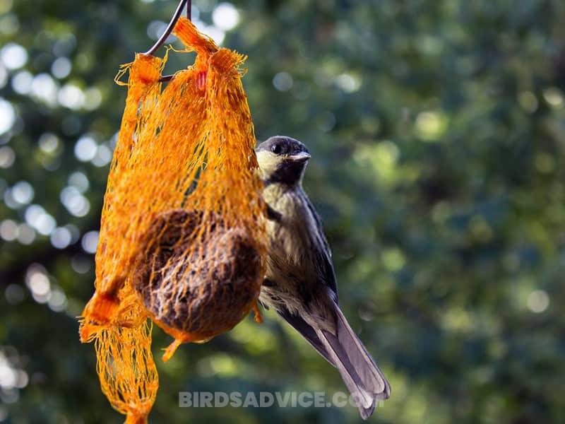 Use sparrow proof bird feeders