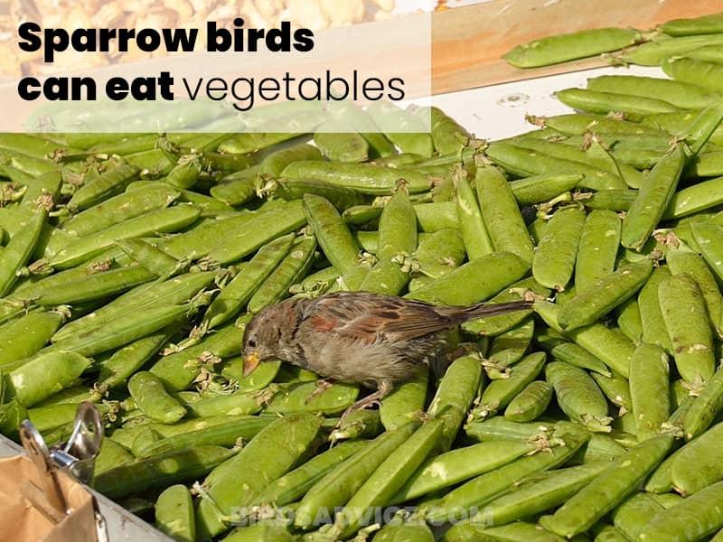 Vegetables for sparrows
