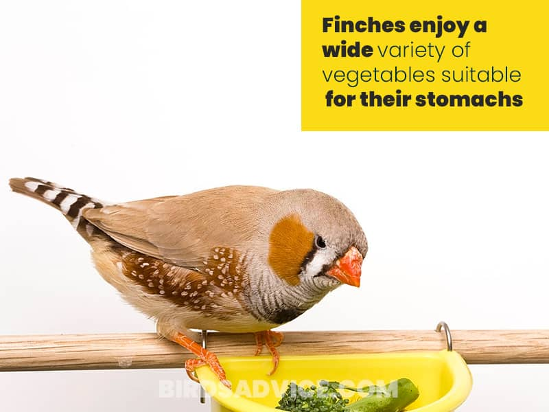 Vegetables food for finches