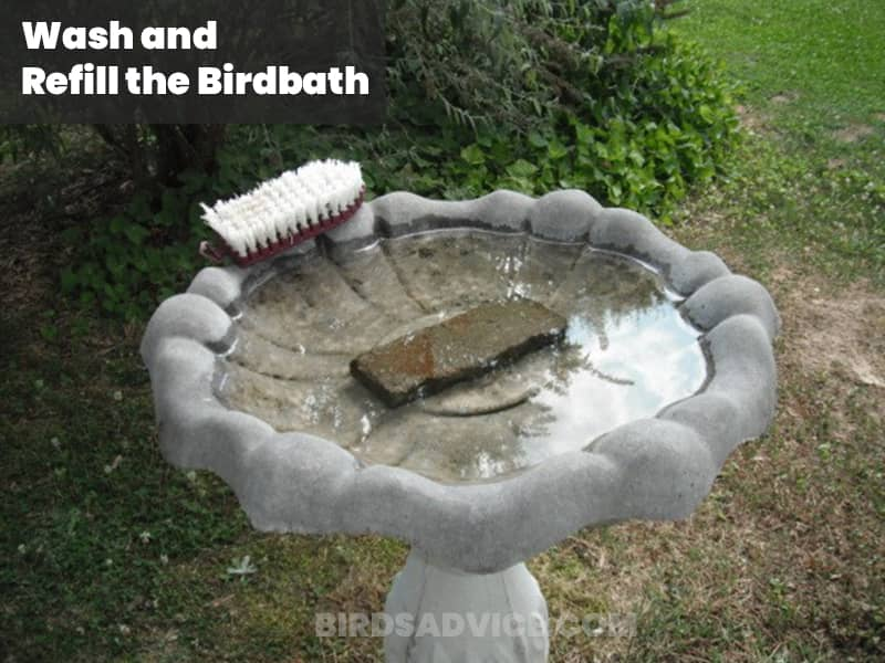 Wash and refill the birdbath