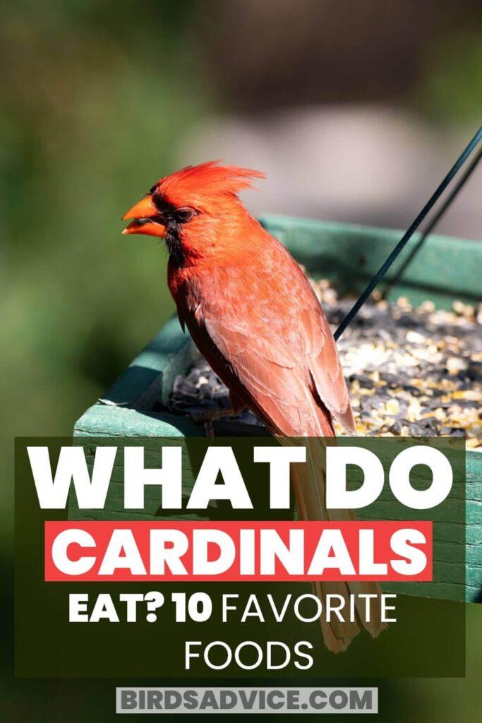 What Do Cardinals Eat? Pinterest Pin