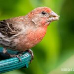 What Do Finches Eat? A Complete Guide Of Feeding Finches