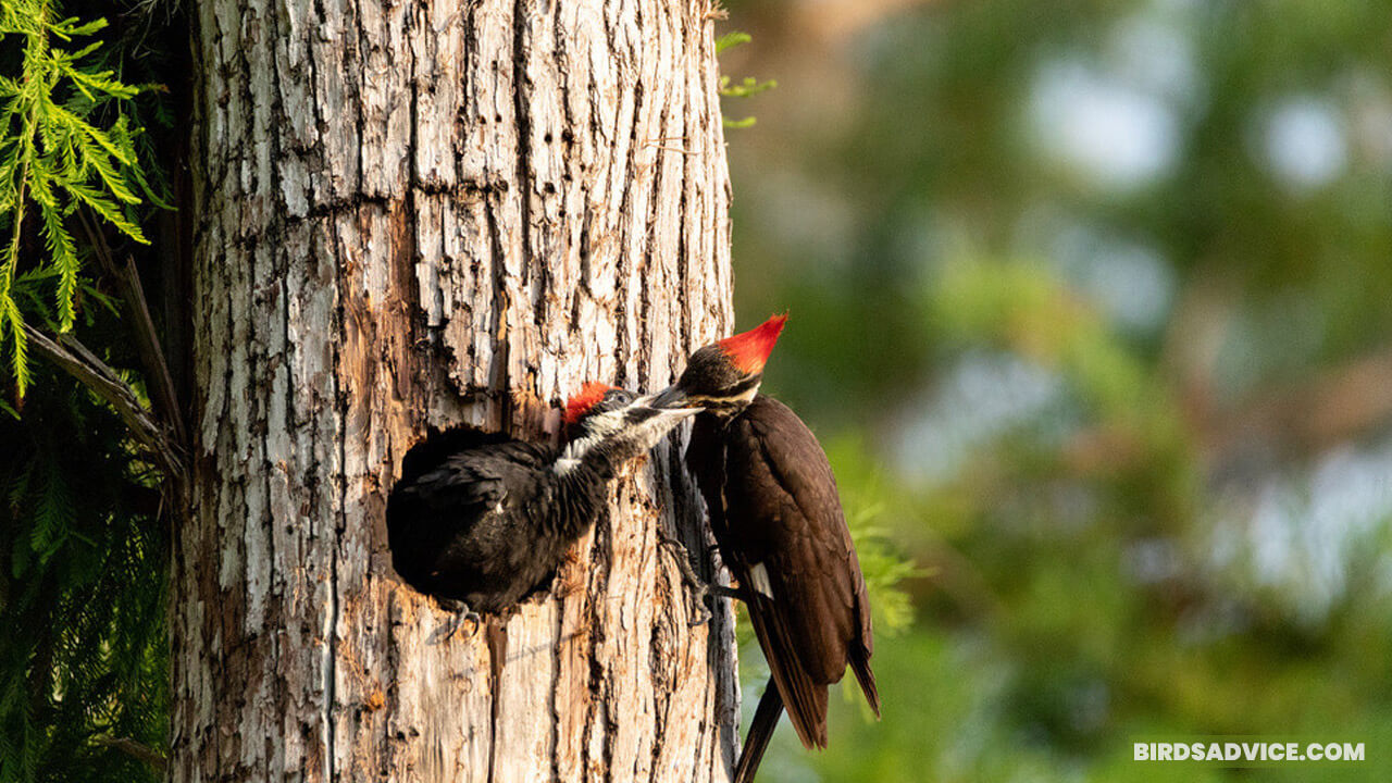 What Do Woodpeckers Eat? 10 Most Common Foods