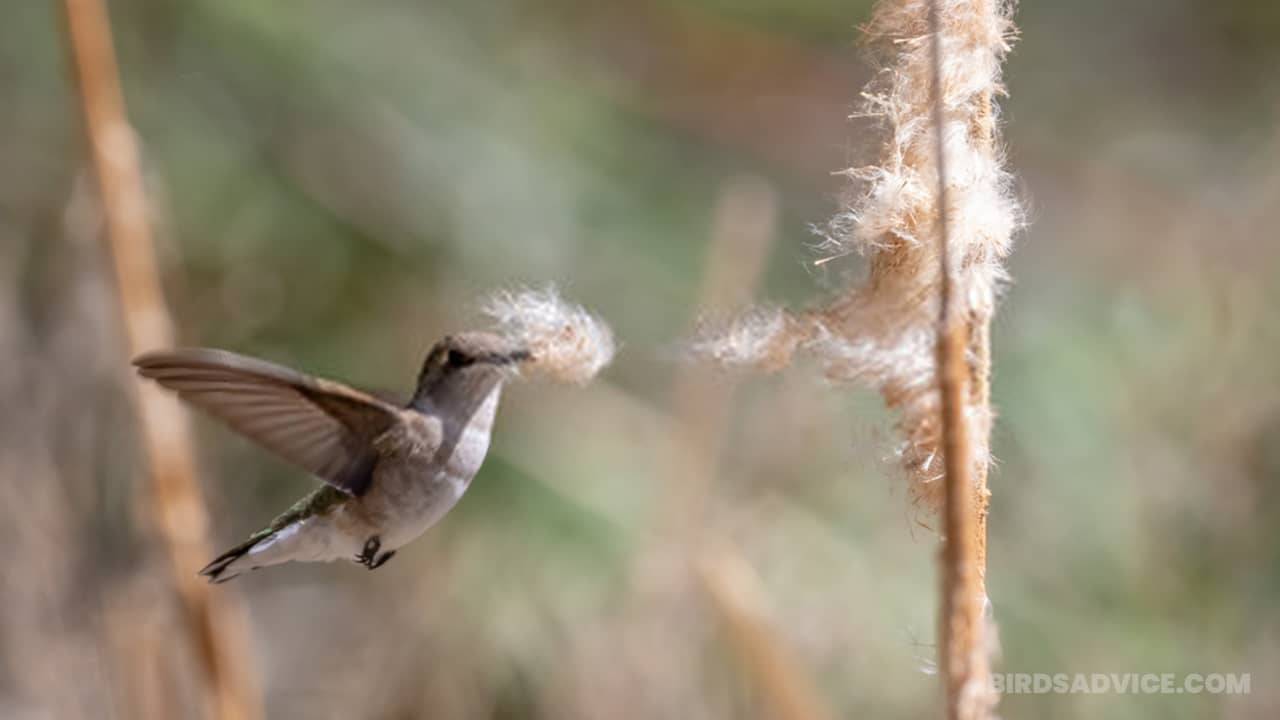 Do Hummingbirds Eat Seeds? A Helpful BirdsAdvice Guide