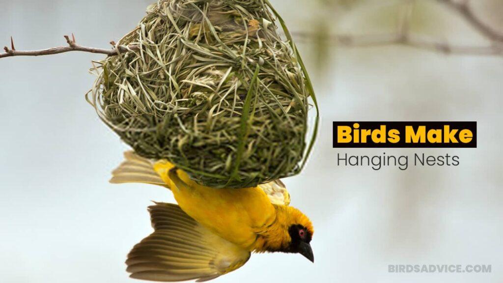 Which Birds Make Hanging Nests