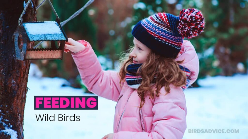 How to feed wild birds