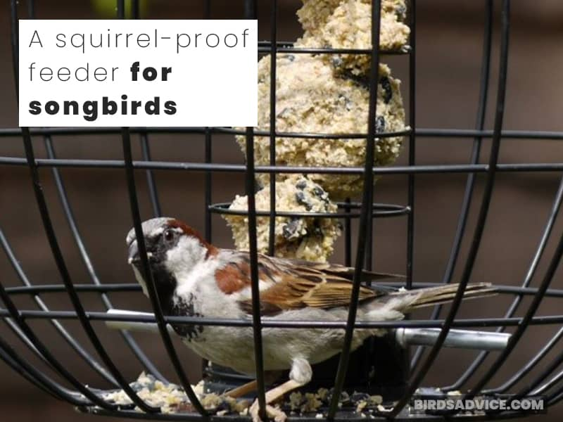 A squirrel-proof feeder for songbirds