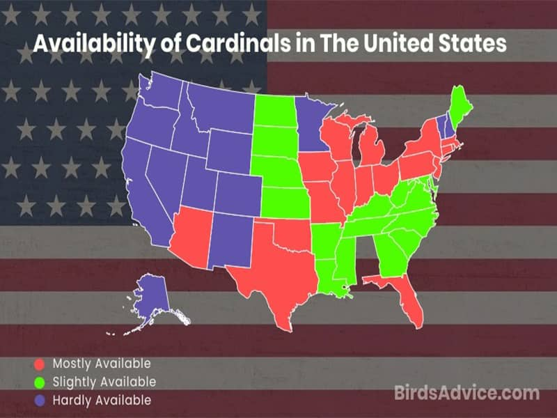 Availability of Cardinals Across Various Regions in the USA