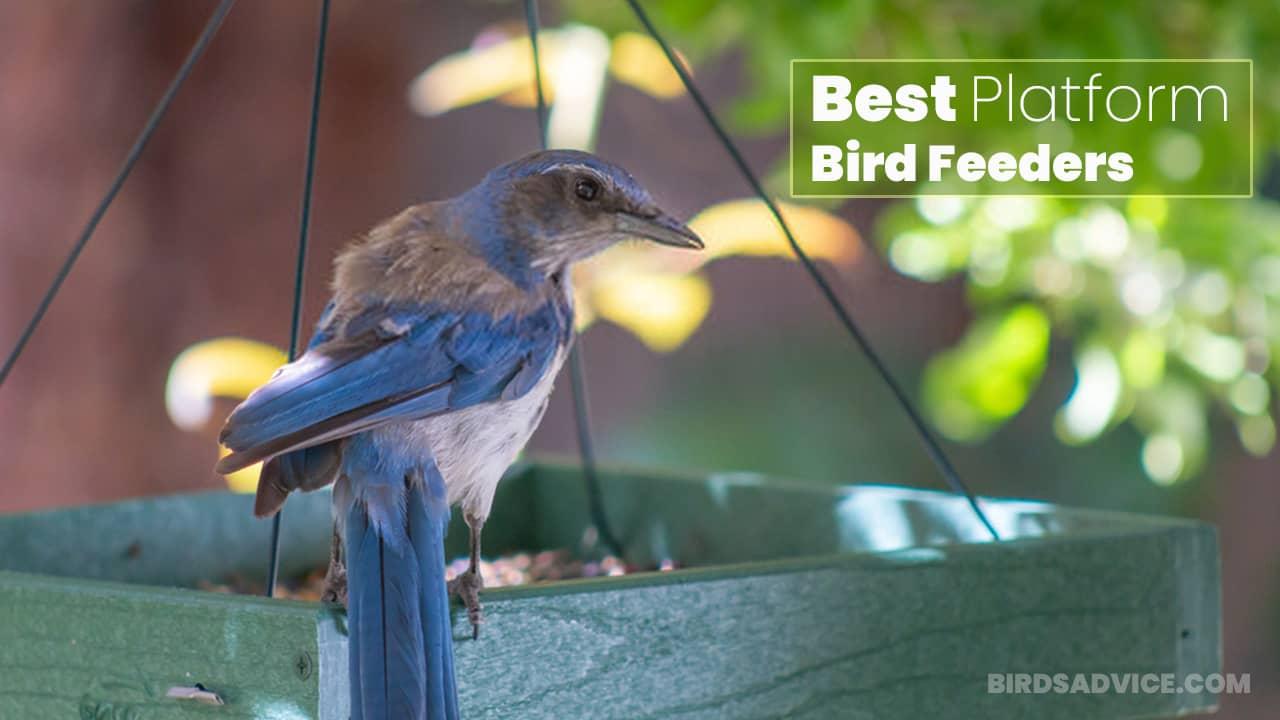 8 Best Platform Bird Feeders That Can Blow Your Mind