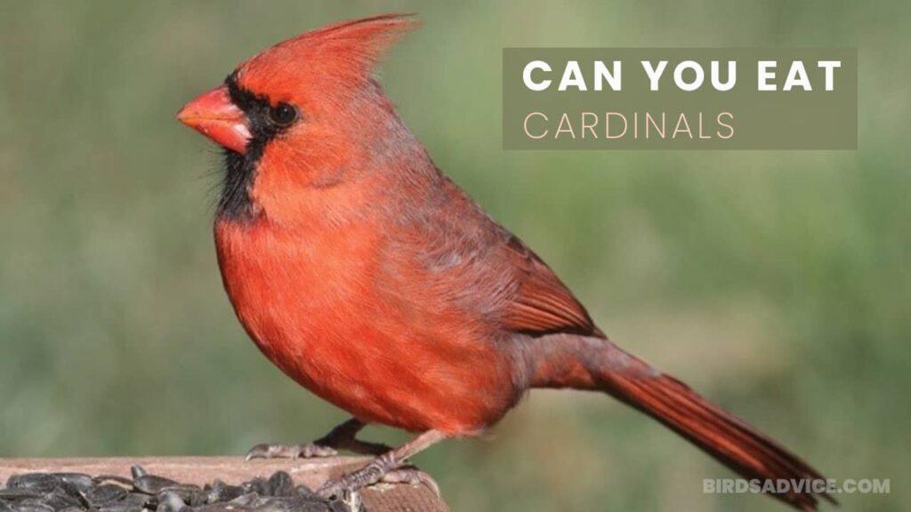 Can You Eat Cardinals