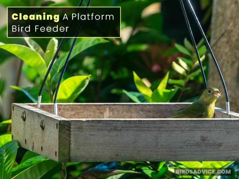 Steps of Cleaning a Platform Bird Feeder