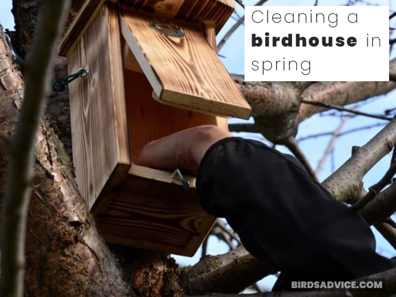 Cleaning a birdhouse in spring