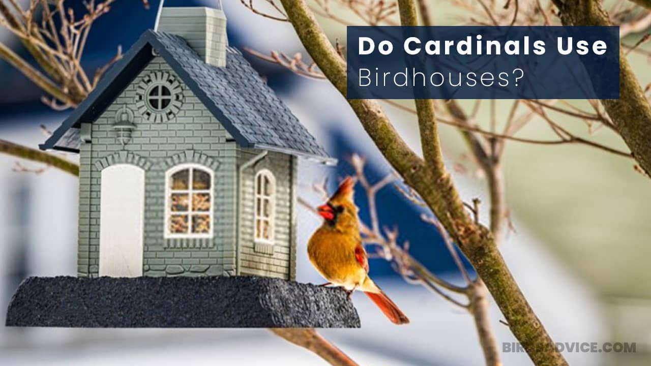 Do Cardinals Use Birdhouses? The Fact You Didn't Know