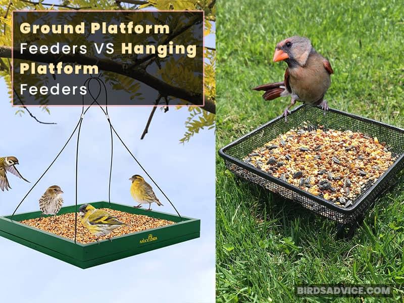 Ground Platform Feeders VS Hanging Platform Feeders