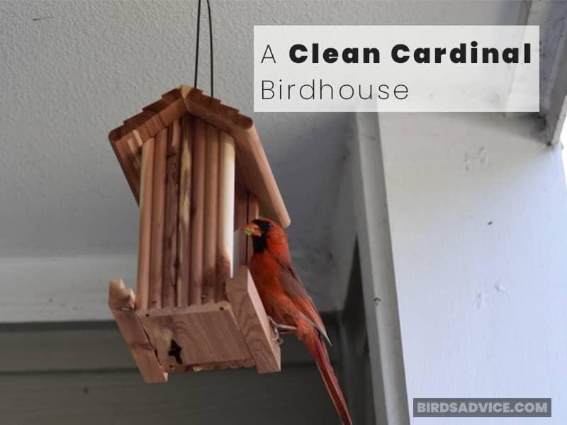 A Clean Cardinal Birdhouse