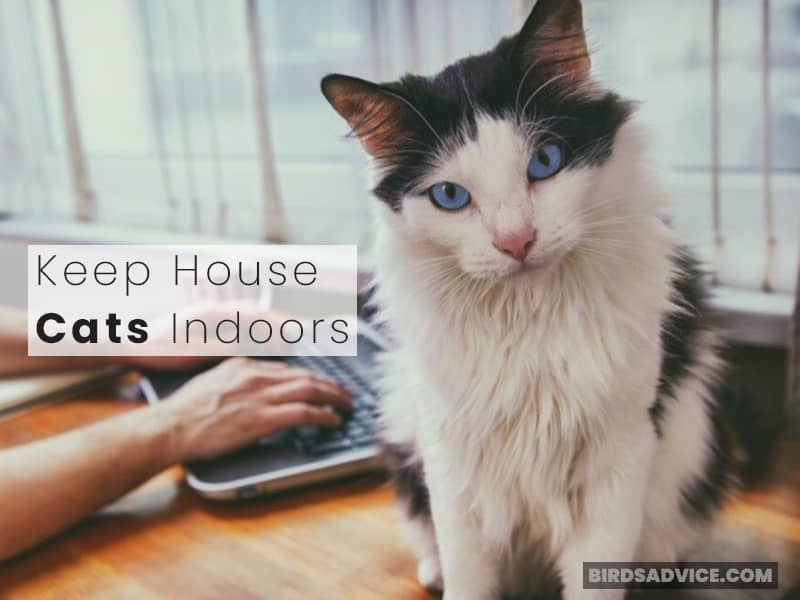 Keep House Cats Indoors