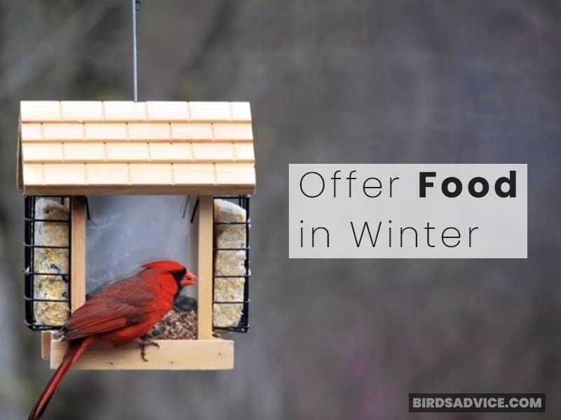 Offer Food in Winter