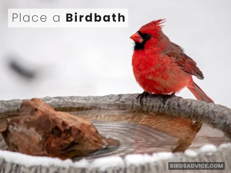 Place a Birdbath