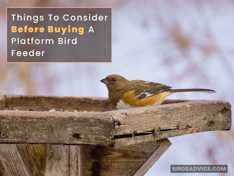 Things To Consider Before Buying A Platform Bird Feeder