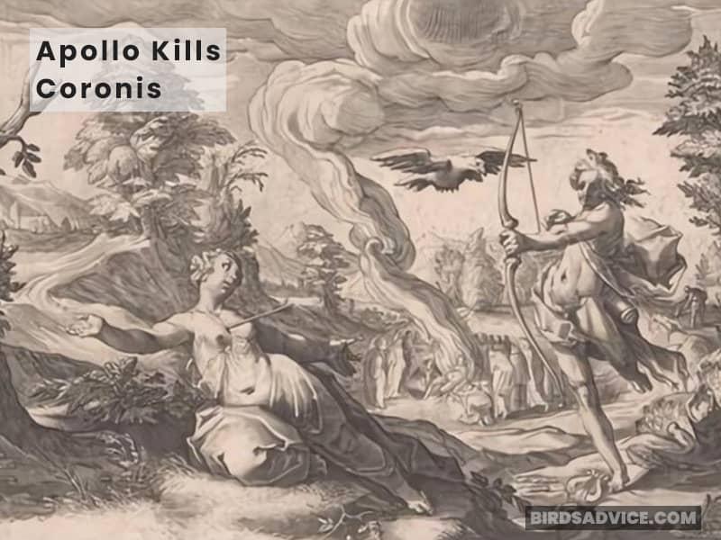 Apollo Kills Coronis