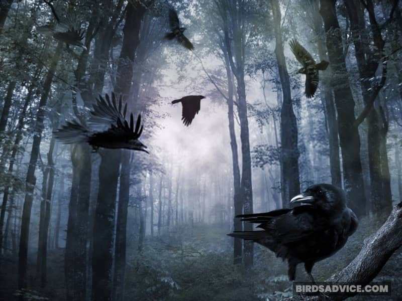 Are Crows Awake At Night?