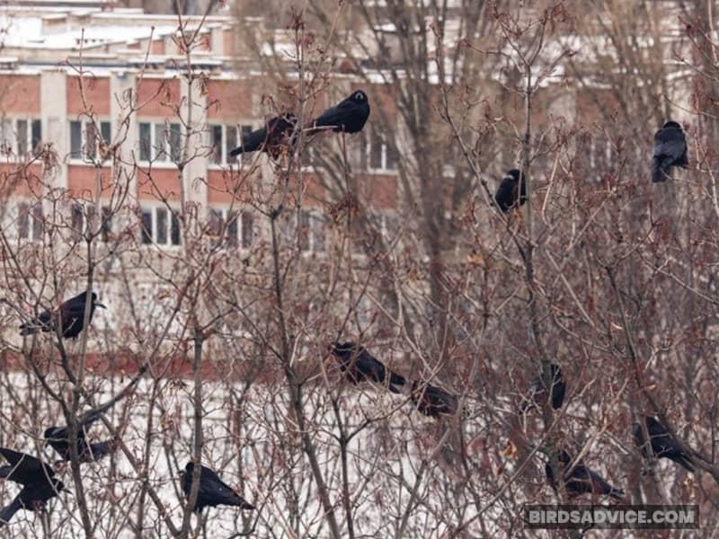 Create A Crow-Friendly Environment