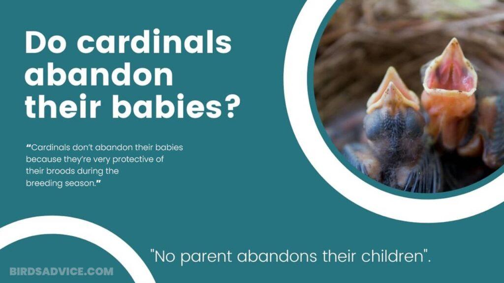 Do Cardinals Abandon Their Babies