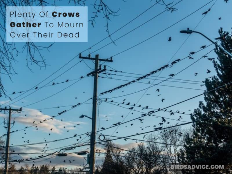 Saying Goodbye To A Dead Crow