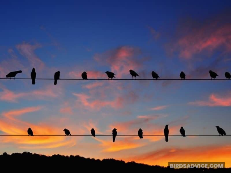 What Time Do Crows Go To Sleep And Wake Up?