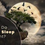 Where Do Crows Sleep At Night? Birds Advice