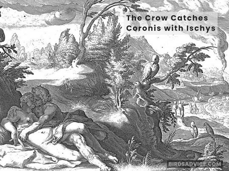 The Crow Catches Coronis with Ischys