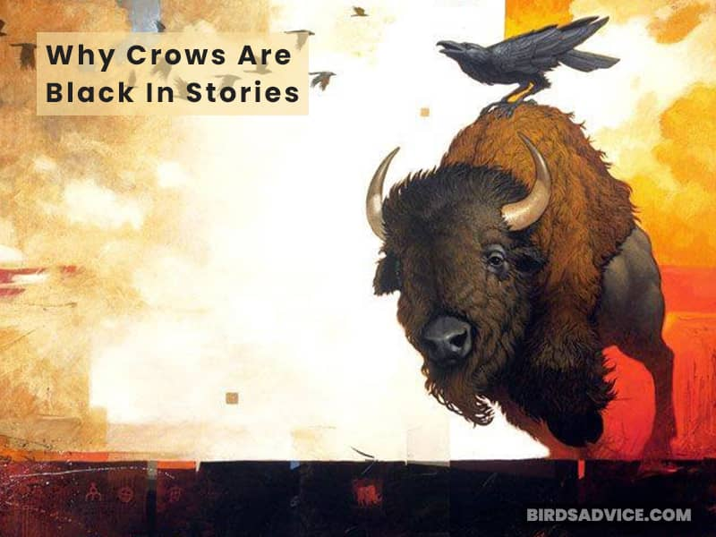 Why Crows Are Black In Stories