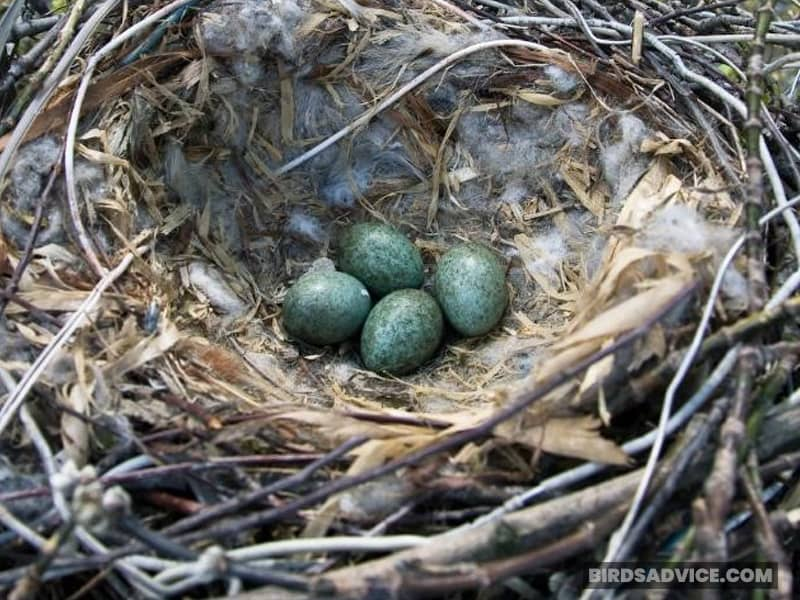 A Crow Nest From Above