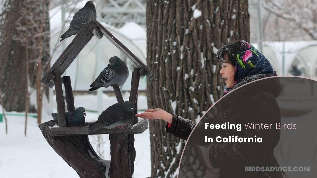 Feeding Winter Birds In California | Birds Advice