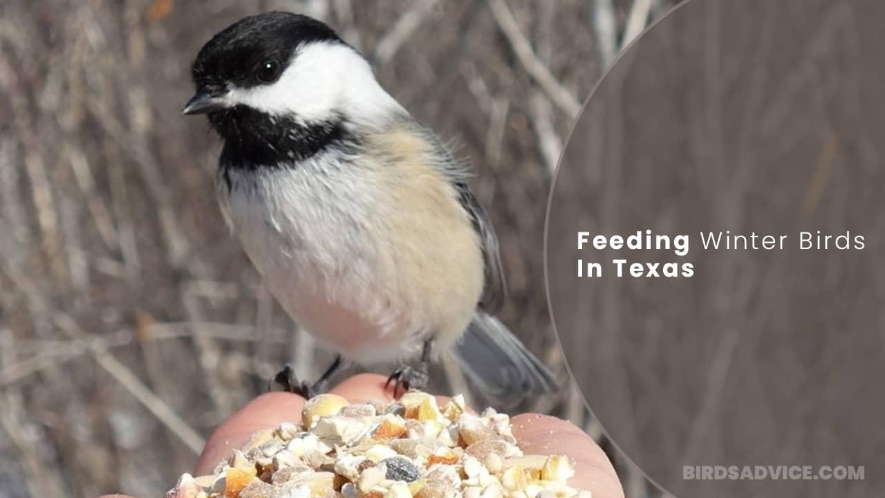 Feeding Winter Birds In Texas | Birds Advice