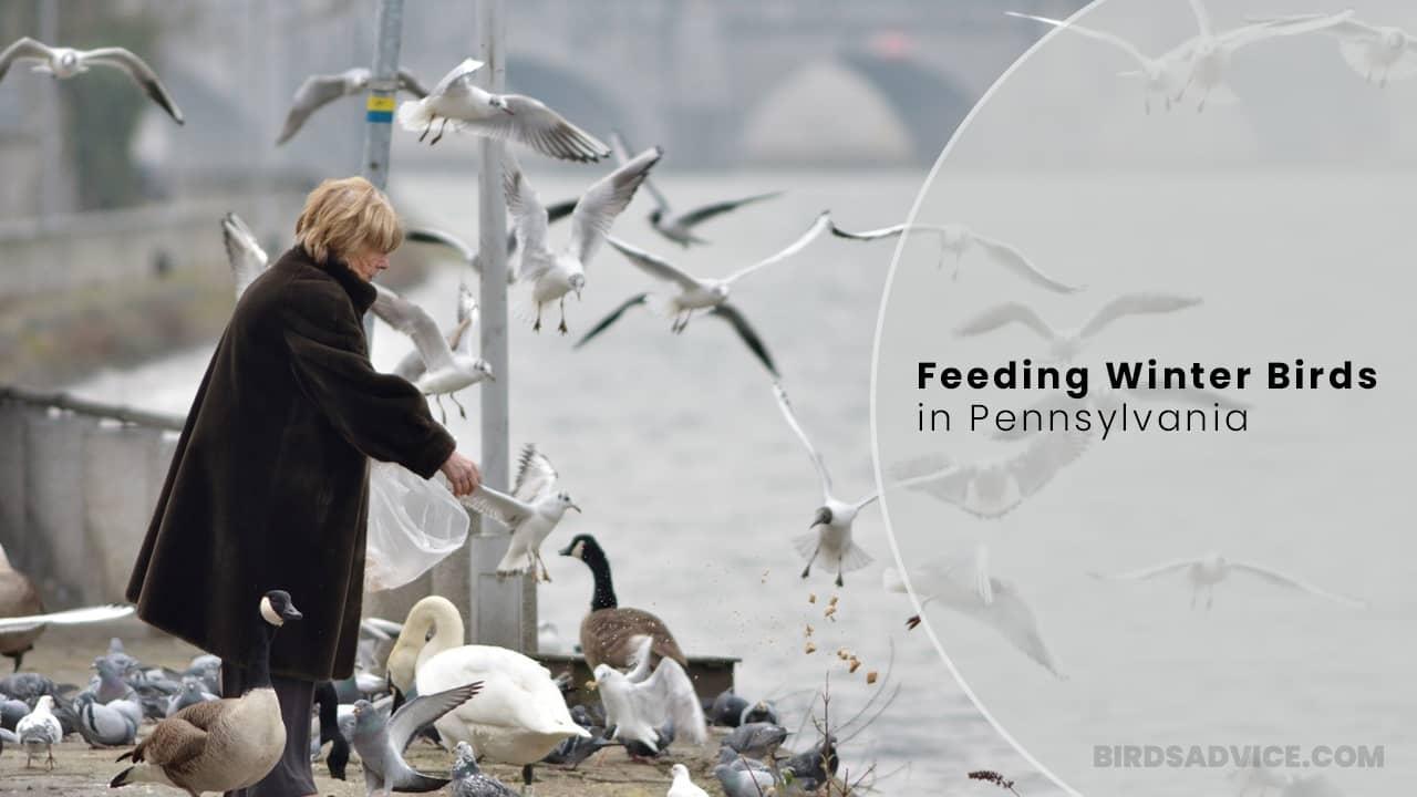 Feeding Winter Birds In Pennsylvania | Birds Advice