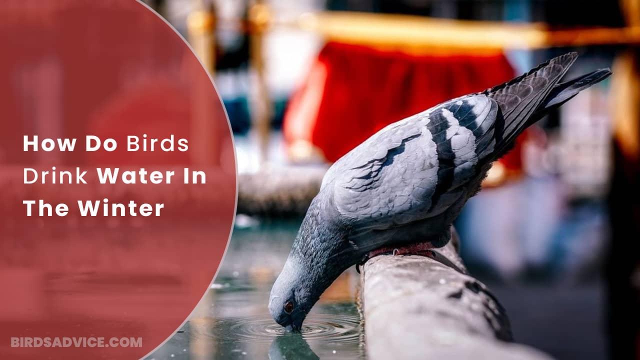 How Do Birds Drink Water In The Winter? Birds Advice