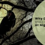 Why Do Crows Make Noise At Night? 7 Probable Reasons
