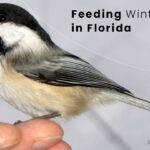 Feeding Winter Birds in Florida | Birds Advice