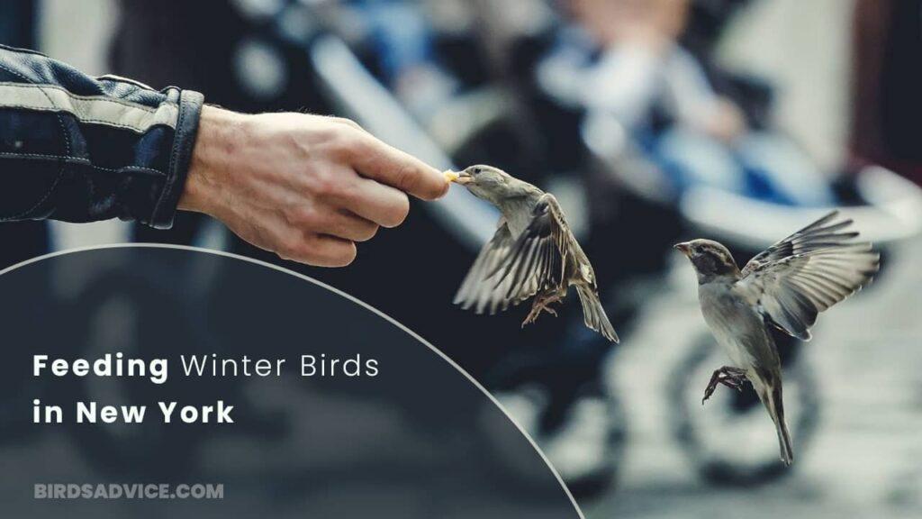 Feeding Winter Birds in New York