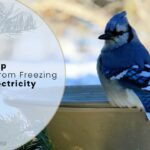 How To Keep Bird Bath From Freezing Without Electricity