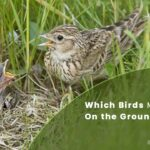 7 Types Of Birds That Make Nests On The Ground