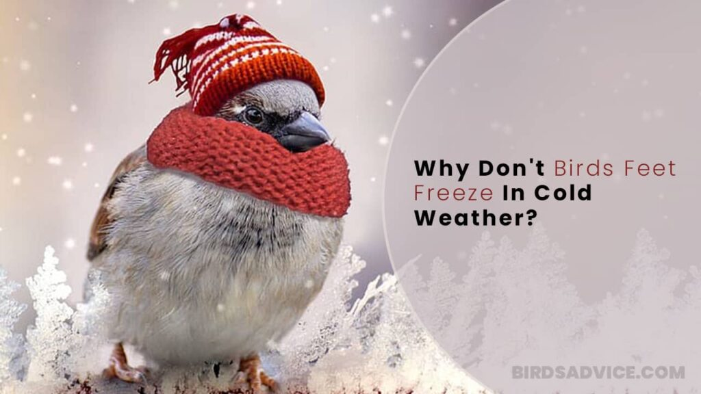 Why Don't Birds Feet Freeze