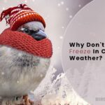 Why Don't Birds Feet Freeze In Cold Weather? Birds Advice