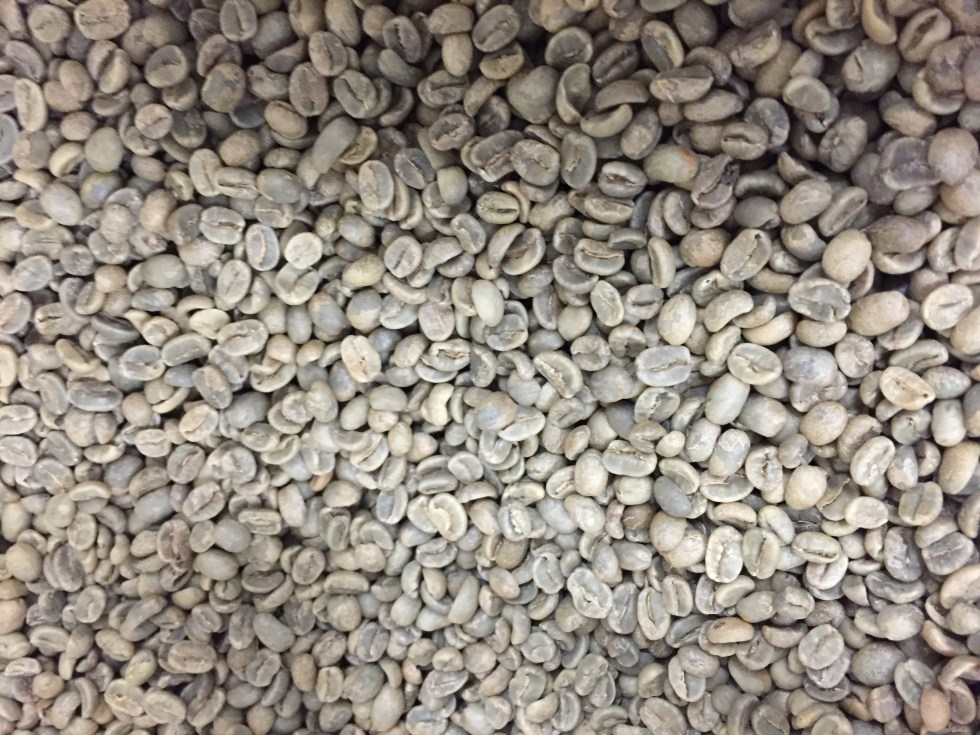 Roast Your Own Green Coffee At Home Birds And Beans Certified