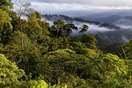 Bird Friendly Coffee = Quality Forest Habitat